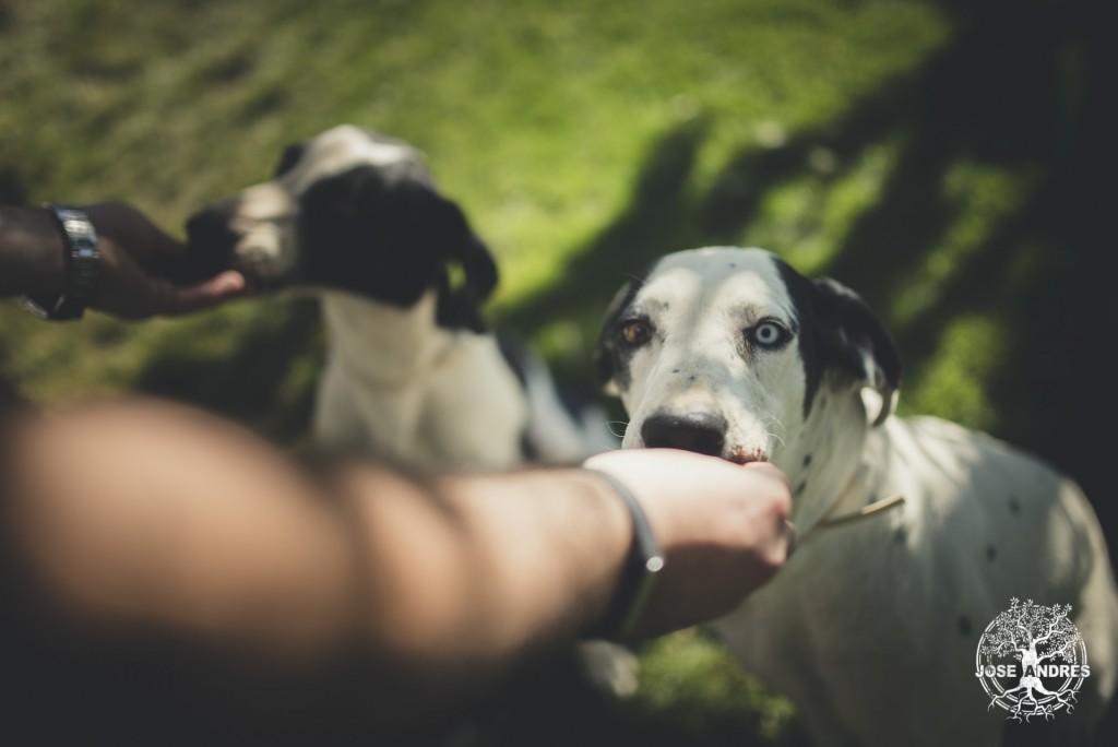 fotos de preboda con perros