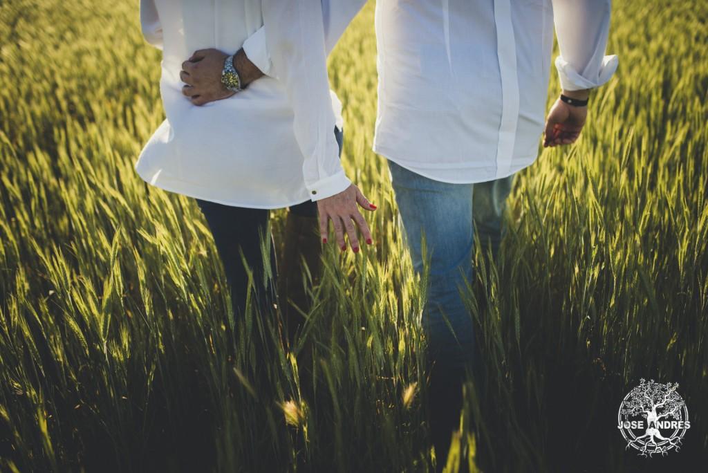fotos de preboda en el campo de trigo